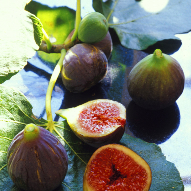 Le Pavillon de Galon - Some figs from our collection